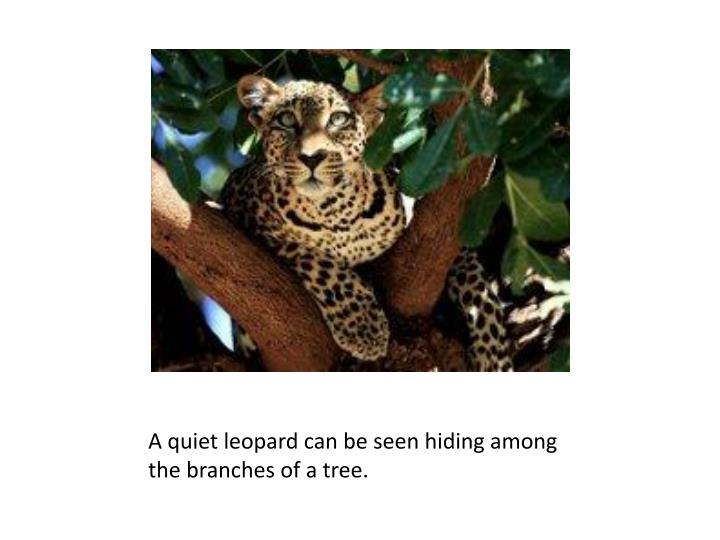 A quiet leopard can be seen hiding among the branches of a tree.