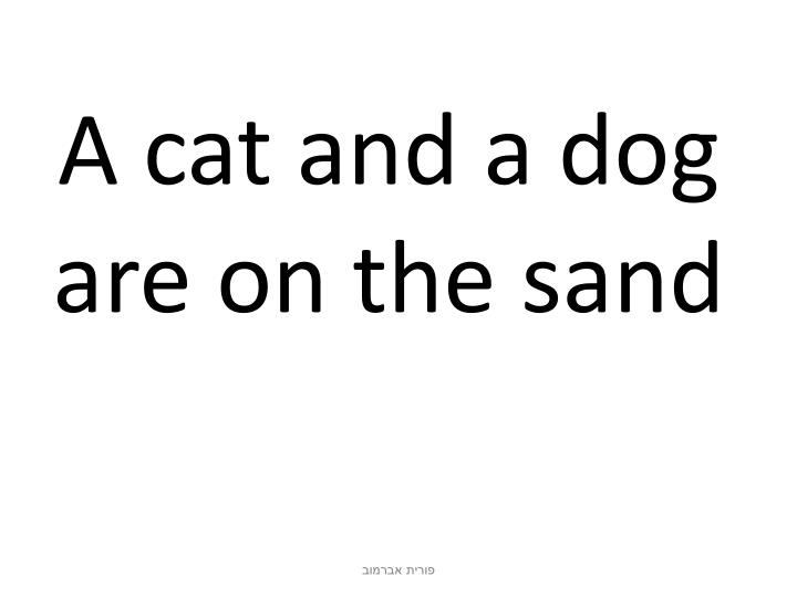 A cat and a dog are on the sand