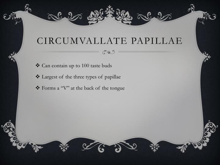 Circumvallate papillae