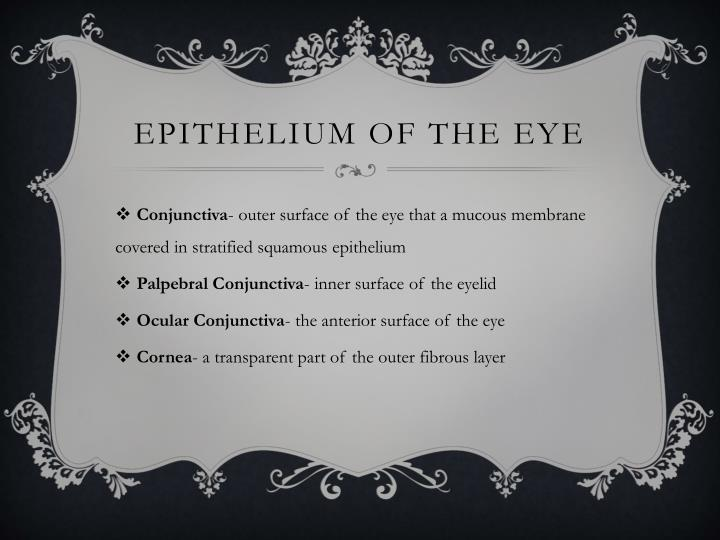 Epithelium of the eye