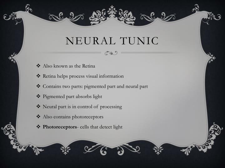 Neural Tunic