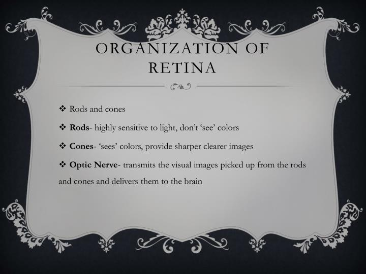 Organization of retina