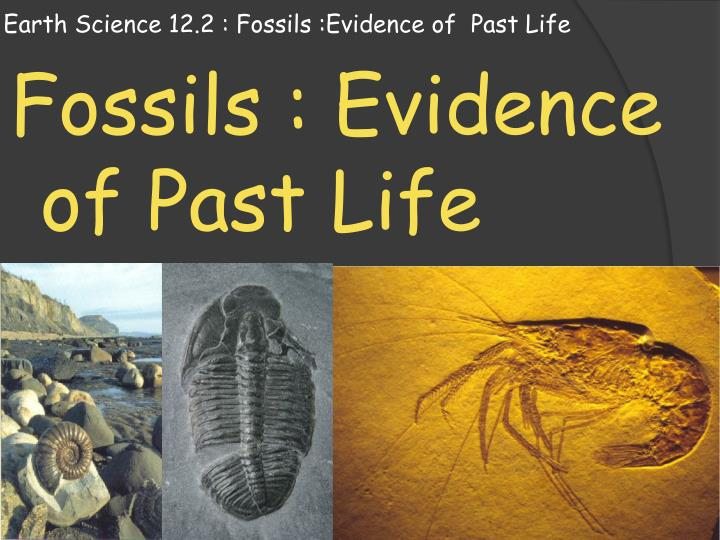 carbon dating age of fossils We could only find two published secular radiocarbon dates for fossils found below ice age layers rethinking carbon-14 dating: carbon-dating fossils.