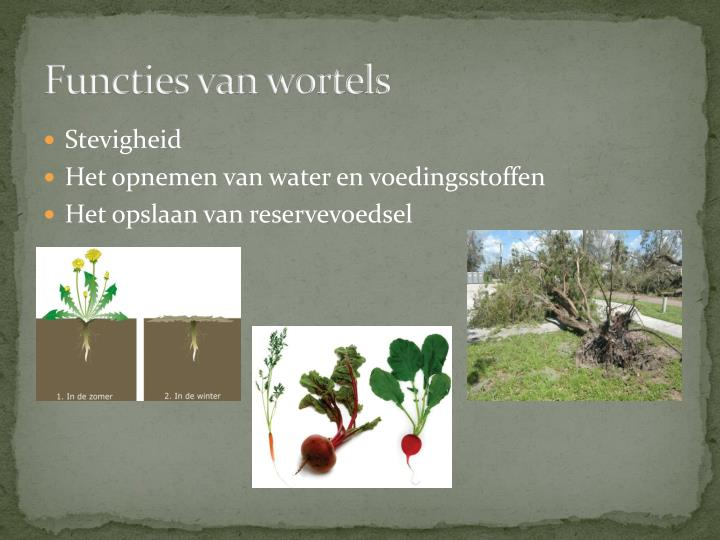 Functies van wortels