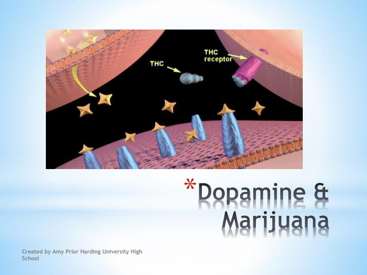Dopamine & Marijuana