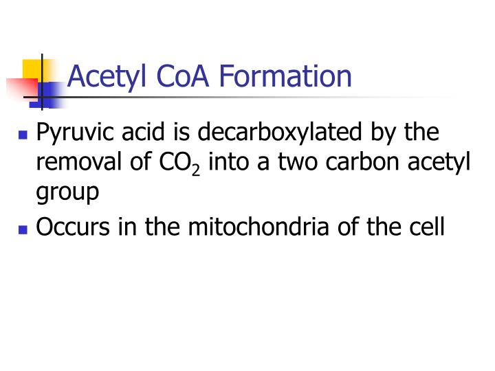 Acetyl CoA Formation