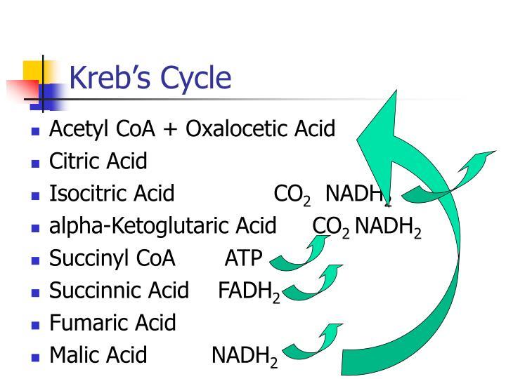 Kreb's Cycle