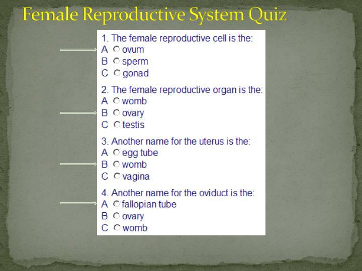 Female Reproductive System Quiz