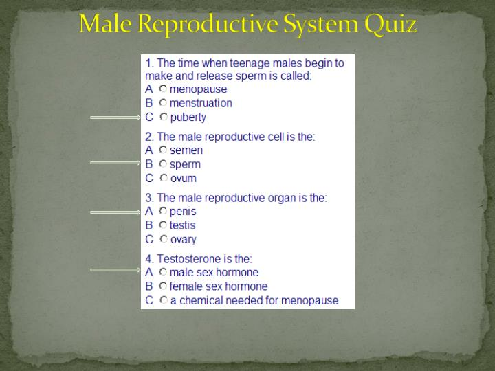 Male Reproductive System Quiz