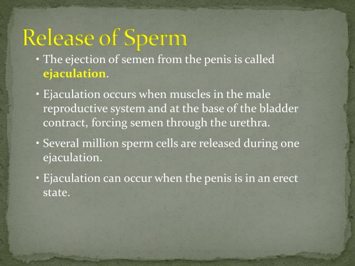 Release of Sperm