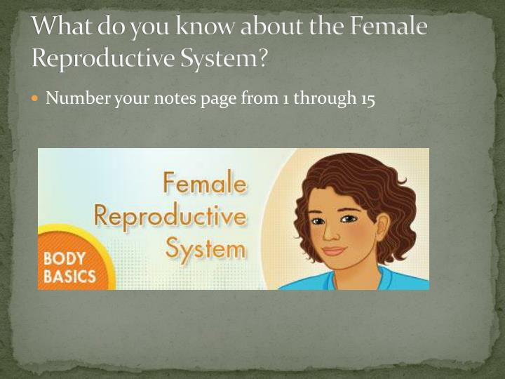 What do you know about the Female Reproductive System?