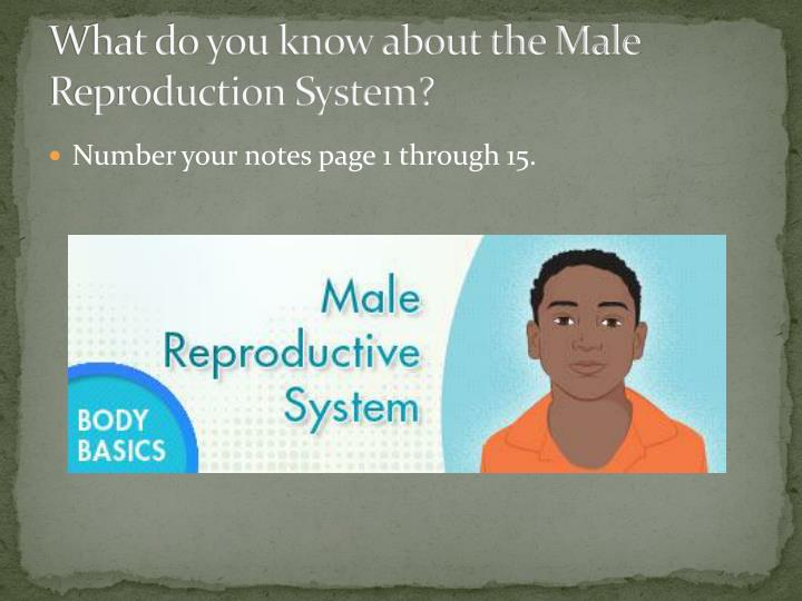 What do you know about the Male Reproduction System?