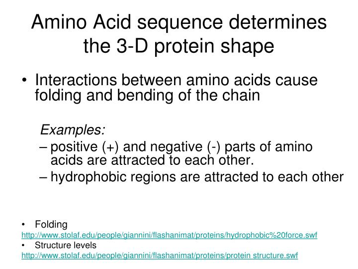 Amino Acid sequence determines the 3-D protein shape