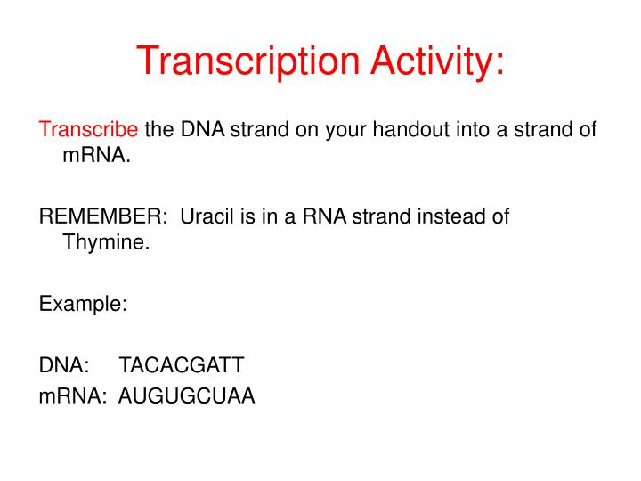 Transcription activity