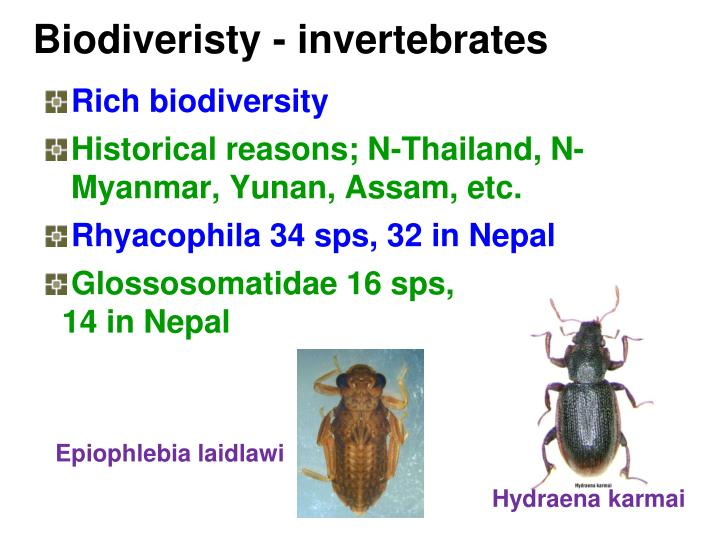 Biodiveristy - invertebrates
