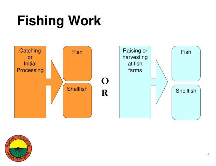 Fishing Work