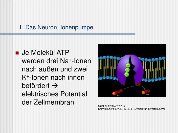 1. Das Neuron: Ionenpumpe