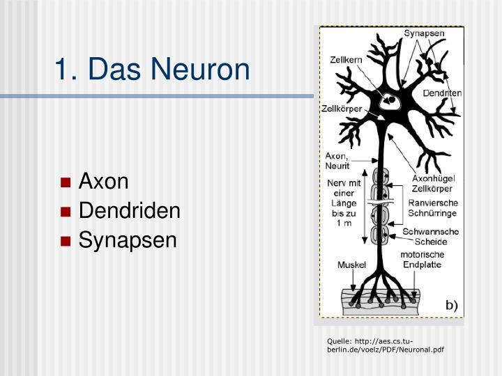 1. Das Neuron