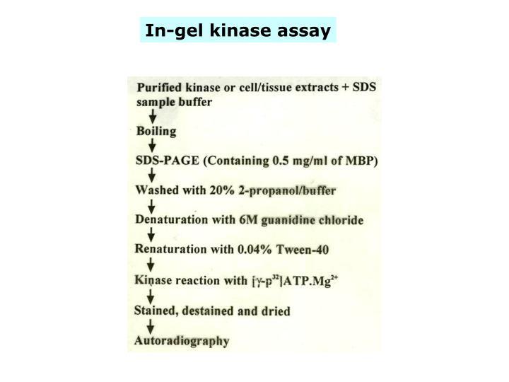 In-gel kinase assay
