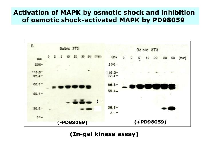 Activation of MAPK by osmotic shock and inhibition