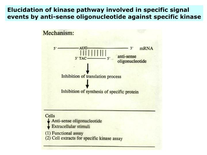 Elucidation of kinase pathway involved in specific signal