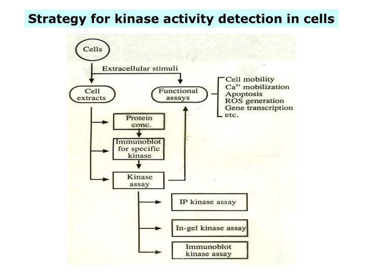 Strategy for kinase activity detection in cells
