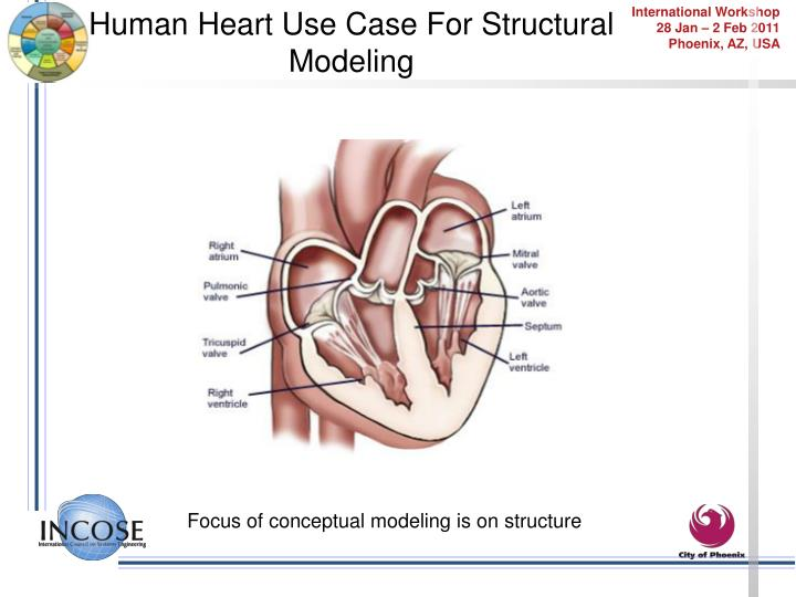 Human Heart Use Case For Structural Modeling