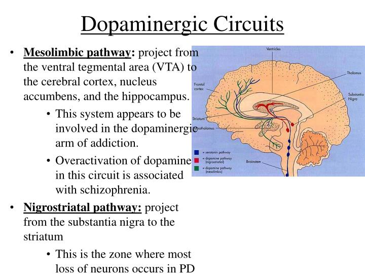 Dopaminergic Circuits
