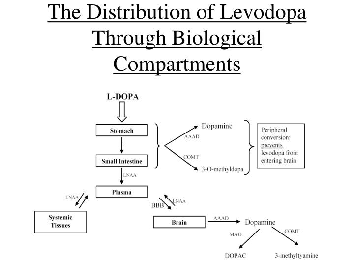 The Distribution of Levodopa Through Biological Compartments