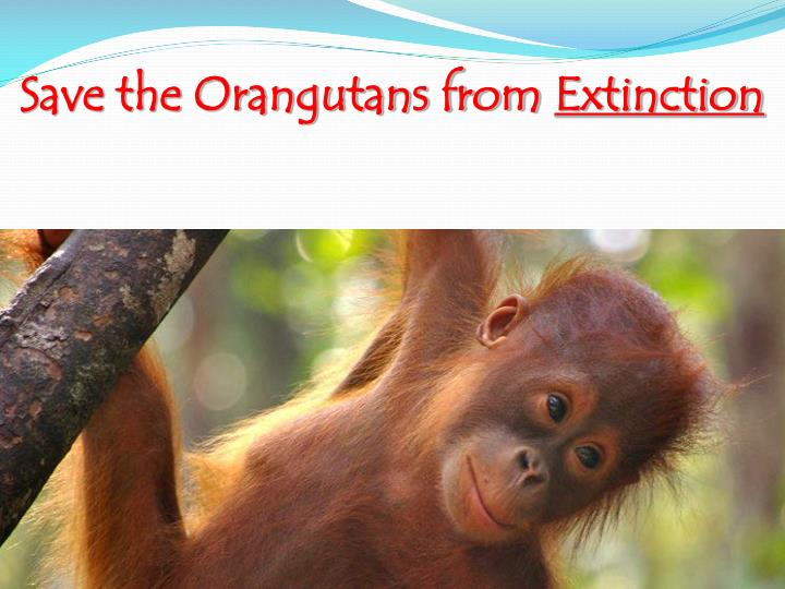 Save the Orangutans from