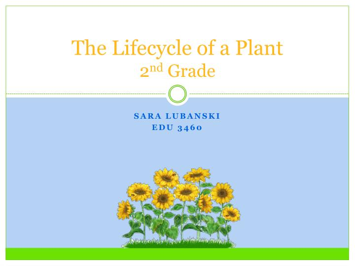The lifecycle of a plant 2 nd grade