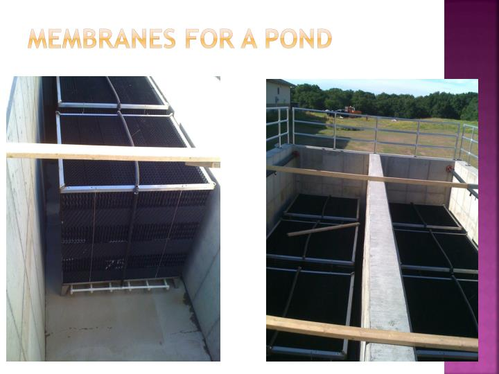 Membranes for a Pond