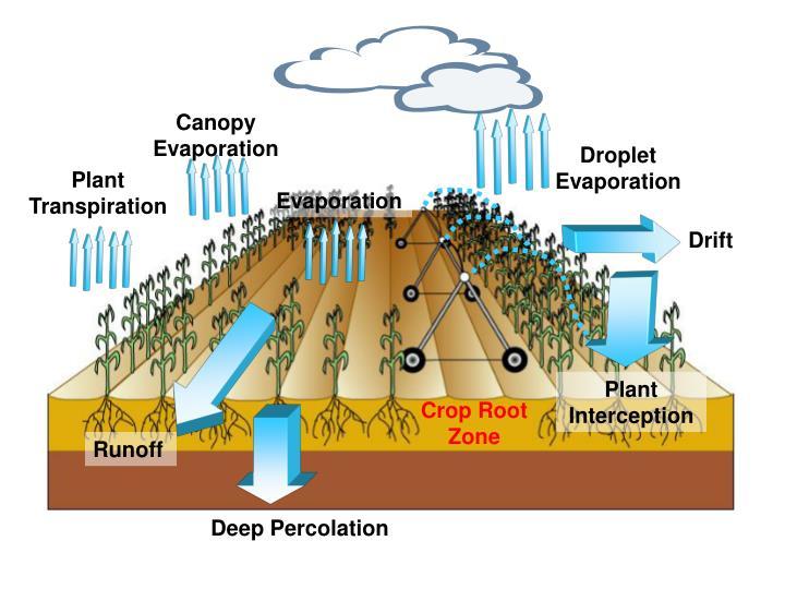 Canopy Evaporation