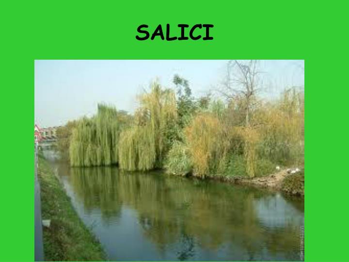 SALICI