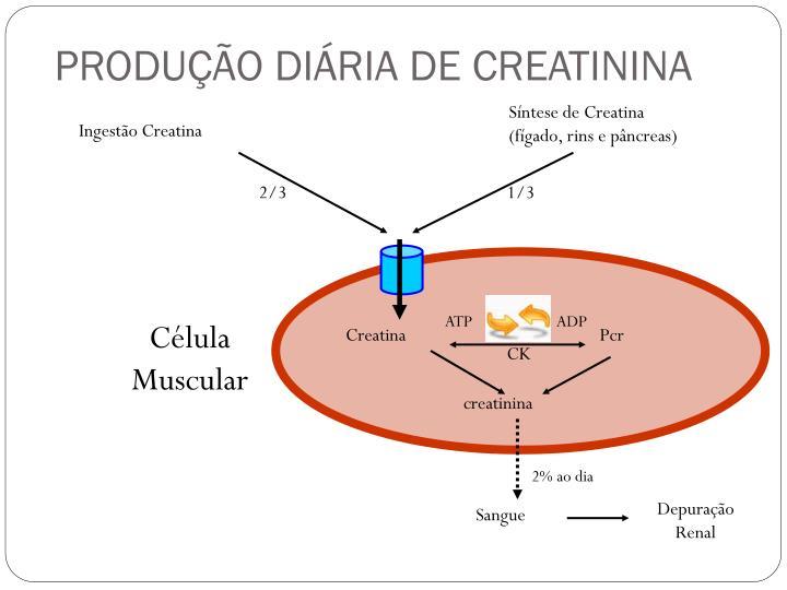 PRODUÇÃO DIÁRIA DE CREATININA