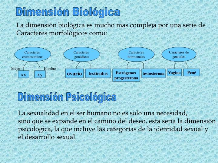 Dimensión Biológica