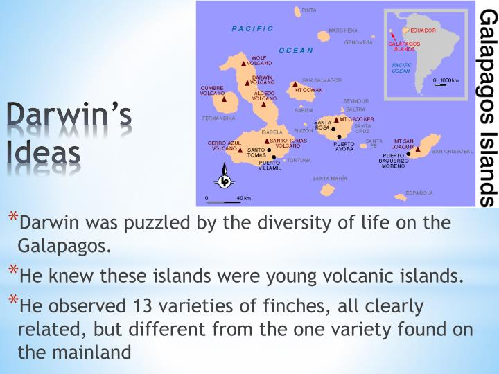 Darwin's