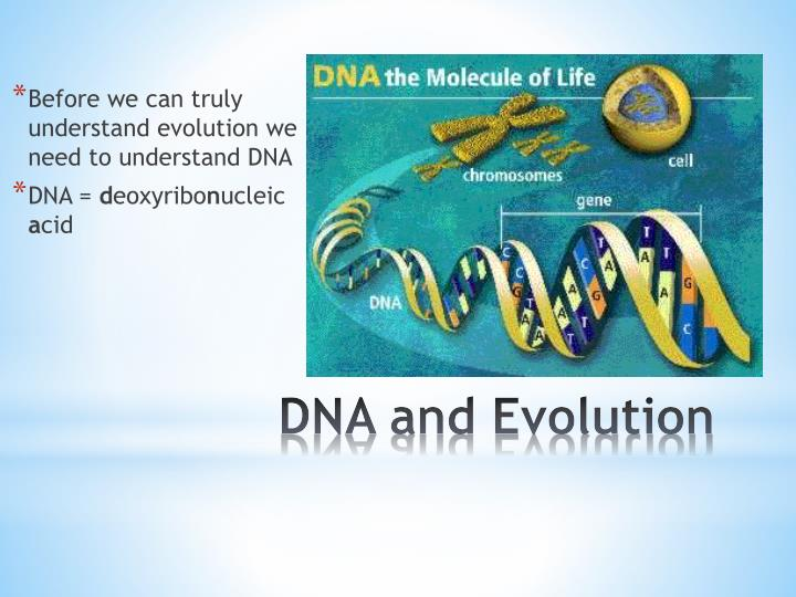 Dna and evolution