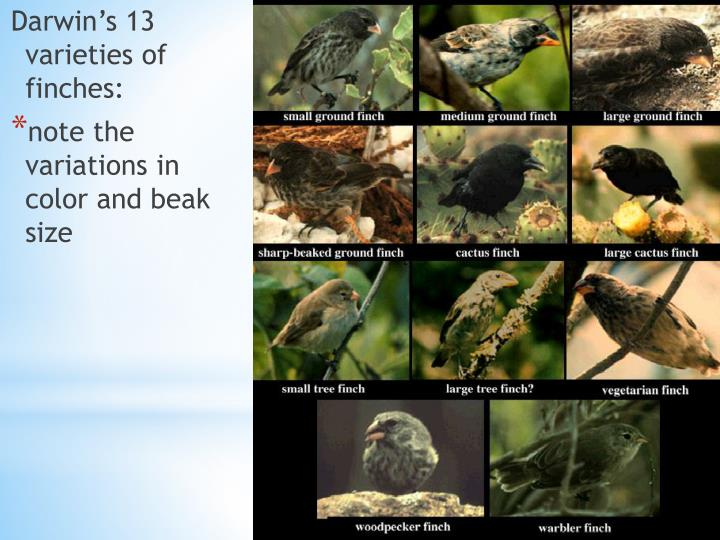Darwin's 13 varieties of finches: