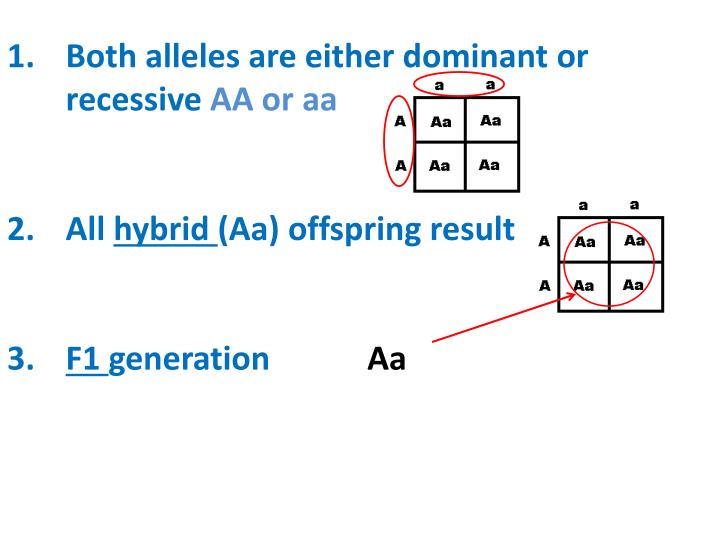 Both alleles are either dominant or recessive