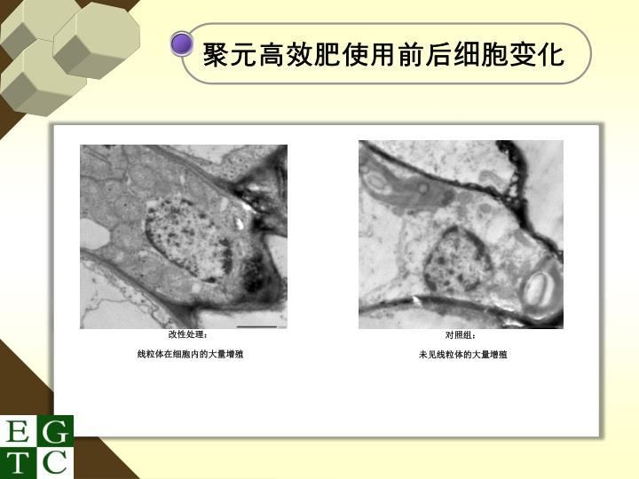 聚元高效肥使用前后细胞变化