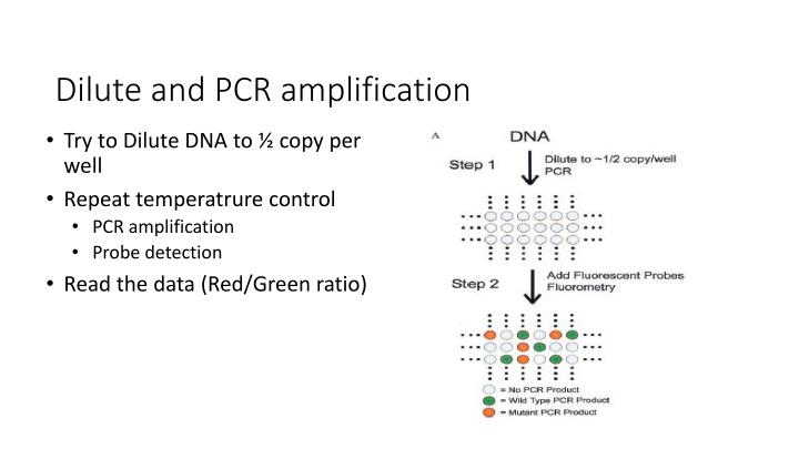 Dilute and PCR amplification