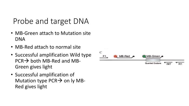 Probe and target DNA