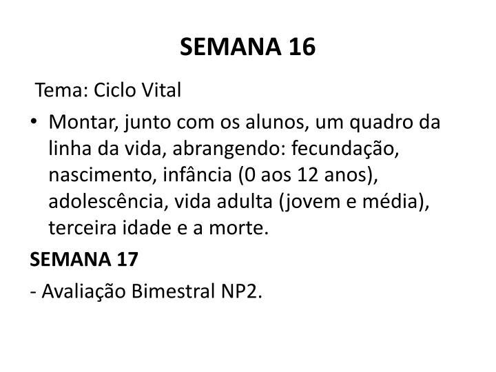 SEMANA 16