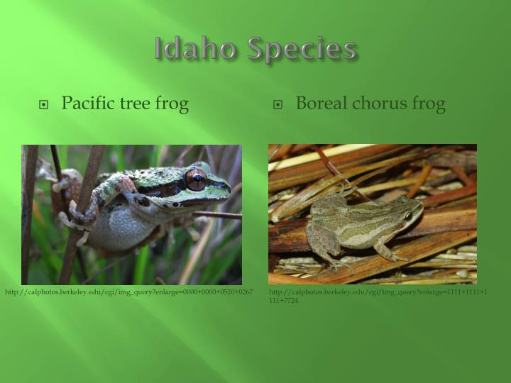 Idaho Species