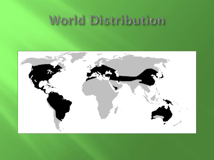 World Distribution