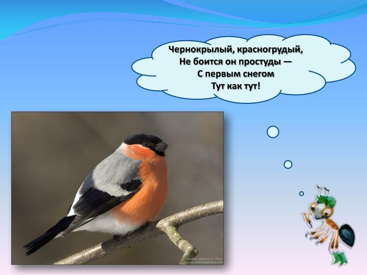 Чернокрылый, красногрудый,
