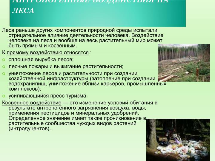 Антропогенные воздействия на леса