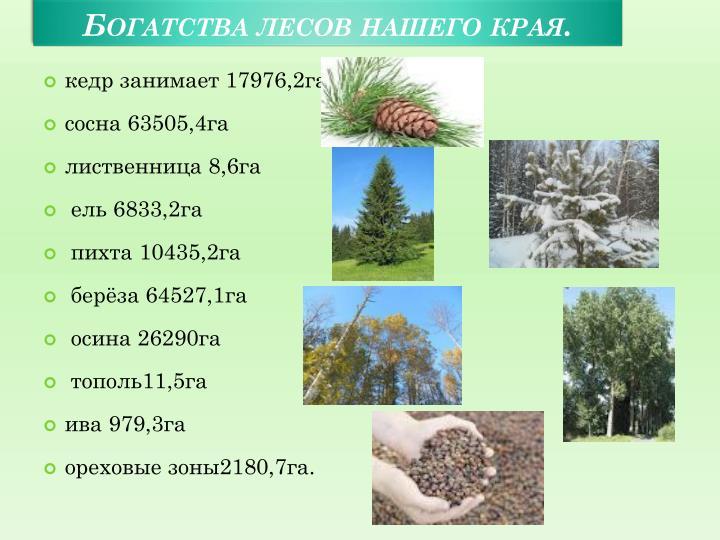 Богатства лесов нашего края.