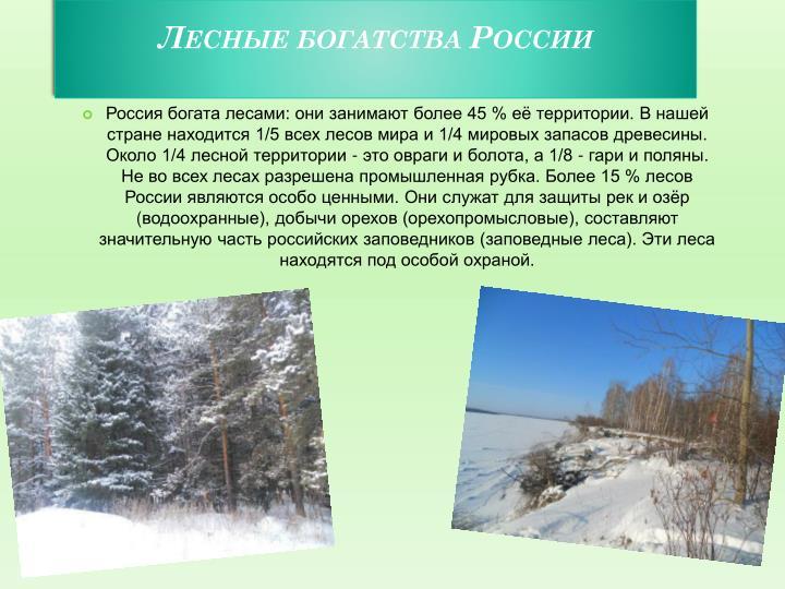 Лесные богатства России